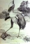 Kobold Quarterly - Terror Birds